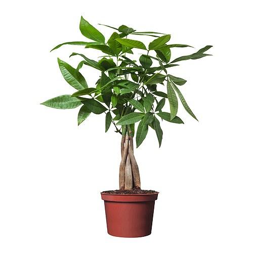 Piante nutrite da vasi biodegradabili la freccia verde for Pianta da pavimento verde